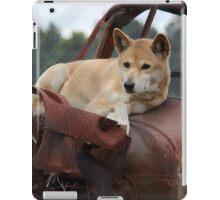 Dingo iPad Case/Skin