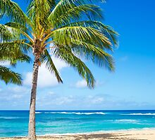 Palm trees on the sandy beach in Hawaii by ellensmile