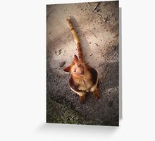 Australian Red Tree Kangaroo Greeting Card