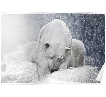 white giant sleeping Poster