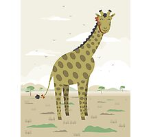 Giraffe in the savanna  Photographic Print