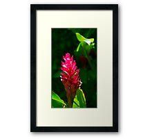 Alpinia flower Framed Print
