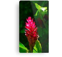 Alpinia flower Metal Print