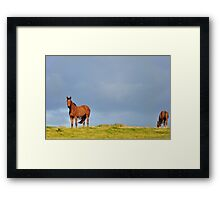 catching the breeze #2 Framed Print