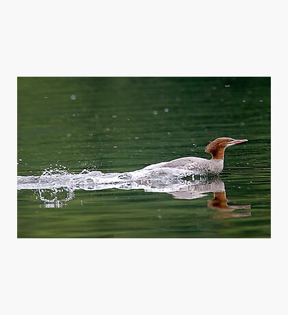 Smooooth Water Landing ! Photographic Print