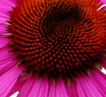 Pink Echinacea 2 Sticker