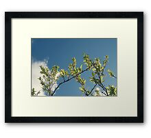 Growth / 2 Framed Print