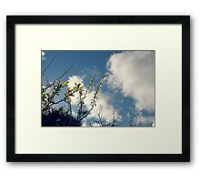 Growth / 3 Framed Print