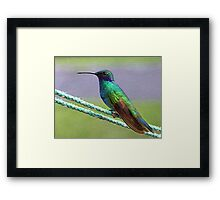 Artful Hummingbird Named Tom Thumb Framed Print