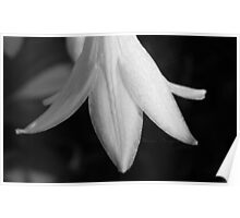 White Flower in High Contrast Poster