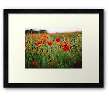 Poppy Field at Sunset Framed Print