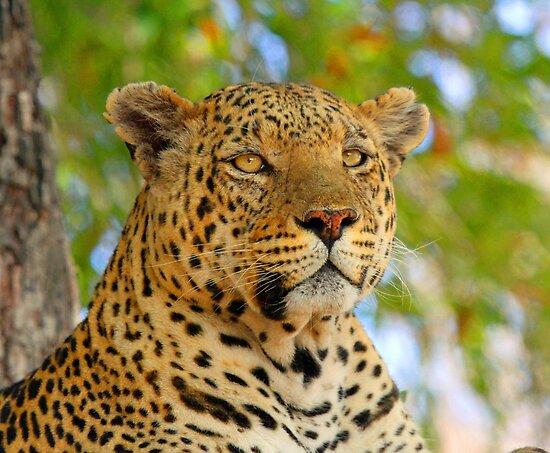 A delta leopard profile by jozi1