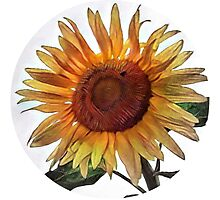Sunflower circle Photographic Print
