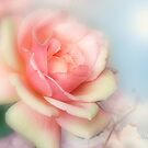 Just a Beautiful Rose by Morag Bates