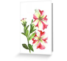 White and Pink Petunias Greeting Card
