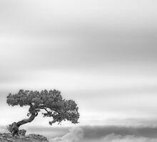 Above the sky by yurybird