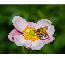 Bee Happy Photographic Print