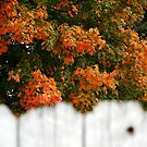 Colorful view over the fence by jammingene