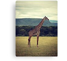 Stiff Sentinel ( Giraffe in Profile ) Canvas Print