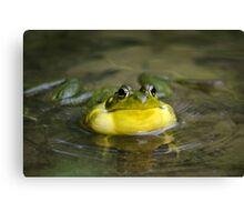 Ribbit Frog Canvas Print