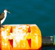 Penguin at Apollo Bay Sticker