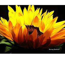 Sunshine, You Make Me Smile! Photographic Print