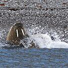 Splash ! by Yves Roumazeilles