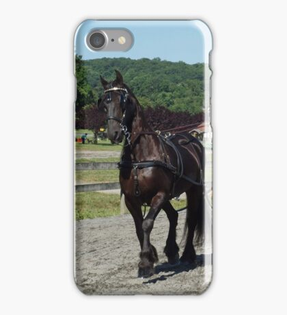 Tandem Team of Friesians iPhone Case/Skin