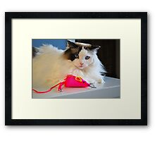 Meet Mikey my Birthday Mouse! Framed Print
