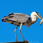 ... the skinny fisherman..caught in the act.. by John44