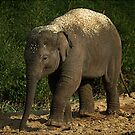 Baby elephant by Declan Carr