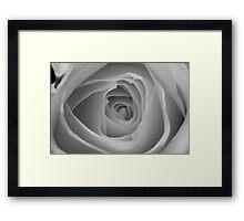 Garden Collection - Rose Framed Print