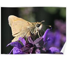Skipper sipping nectar Poster