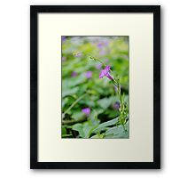 Morning Glory with Tiny Visitor 1 Framed Print