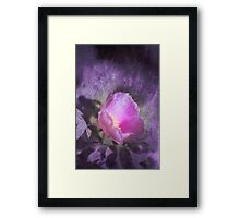 Old fashioned pink rose, purple texture Framed Print