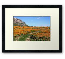 Wild flower walk Framed Print
