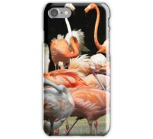 Fab Flamingos iPhone Case/Skin