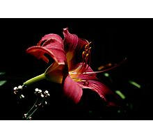 Serenade in Red Photographic Print