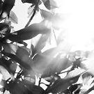 Sunny leaves by Tomasz-Olejnik