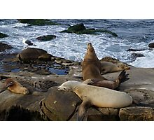 Seagull and Seals Photographic Print