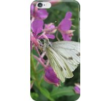 The Cabbage White Butterfly iPhone Case/Skin