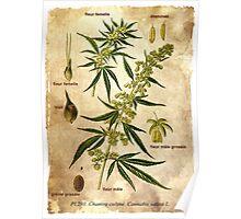 Marihuana plant Poster