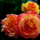 Radiant Roses by BlueMoonRose