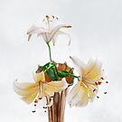 Three Pale Gold Lilies Still Life by LouiseK