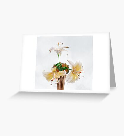 Three Pale Gold Lilies Still Life Greeting Card