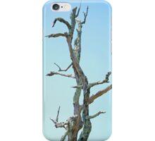 Bare Tree iPhone Case/Skin