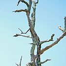 Bare Tree by WeeZie
