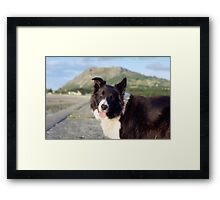 Indy at the beach Framed Print