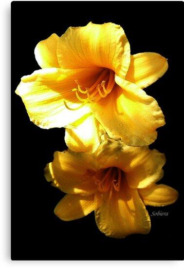 Sunshine Bright Daylilies by Rosemary Sobiera