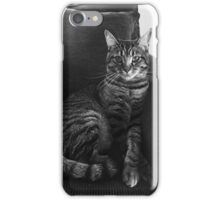 Serious Cat iPhone Case/Skin